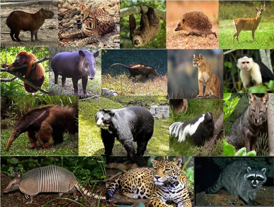 El planeta se está quedando sin sus animales vertebrados