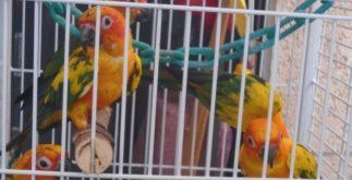 profepa_aves-exoticas-aseguradas-en-merida-2