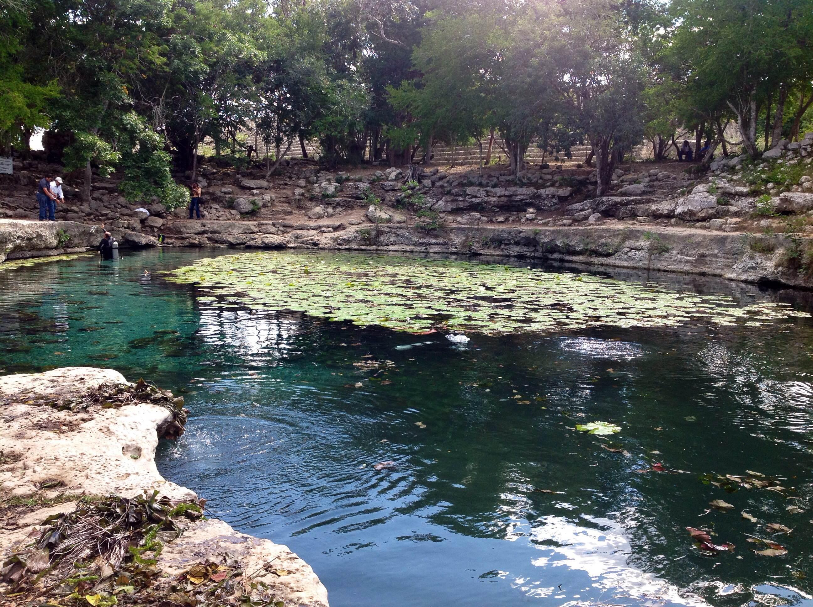 """El pez plecostomus, """"enemigo"""" de cenotes"""