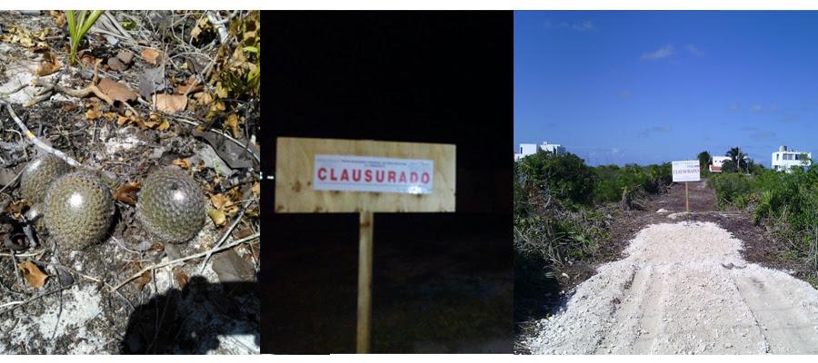 Clausura Profepa cuatro predios en Yucatán