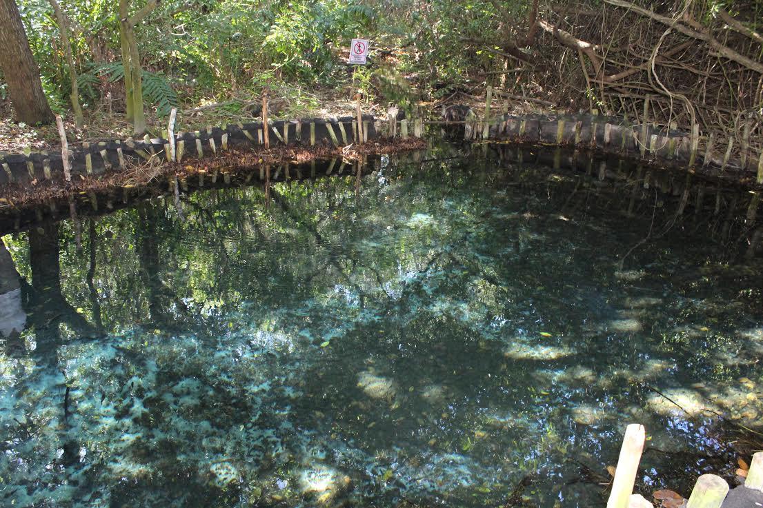 Limpian reserva natural 'El corchito', afectada por súper luna