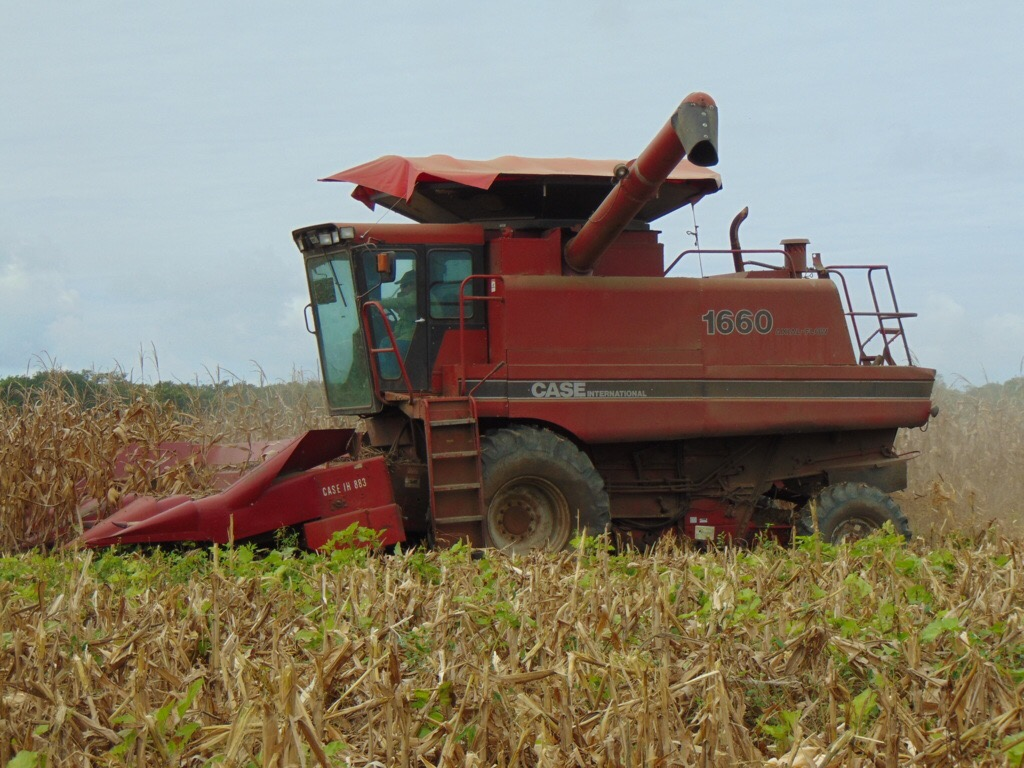 Compañía Valle del Sur cosechará 2,500 toneladas de maíz
