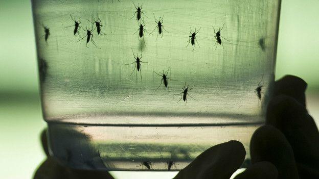 Sigue proliferando zika en Yucatán