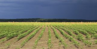 hopelchen-camp-mono-cultivos-de-soya-3-831x392-2.jpg