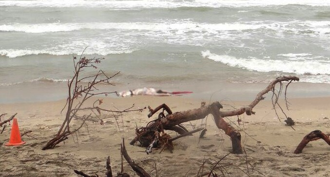 A 10 díasde desaparición de avioneta, emiten reporte oficial