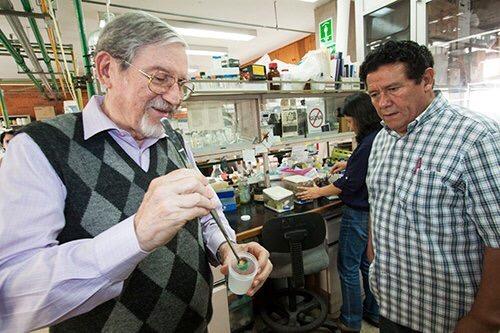 Científico de UNAM descubre antídoto contra veneno de alacrán