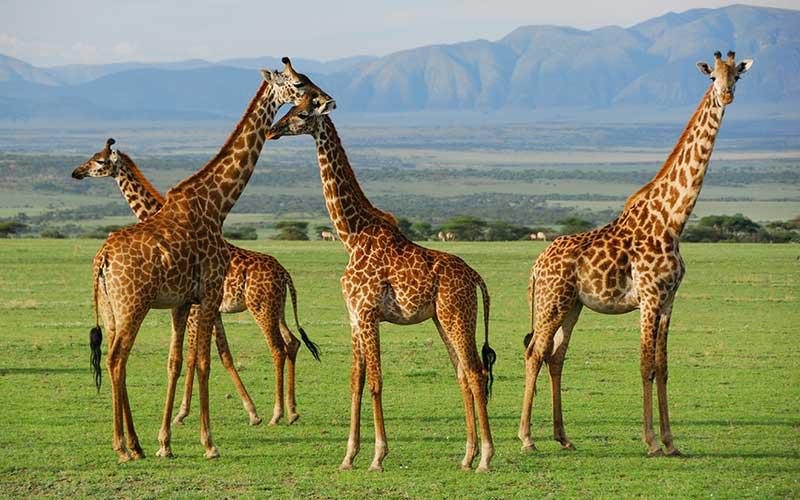 El 66 % de la fauna mundial se perdería para el 2020