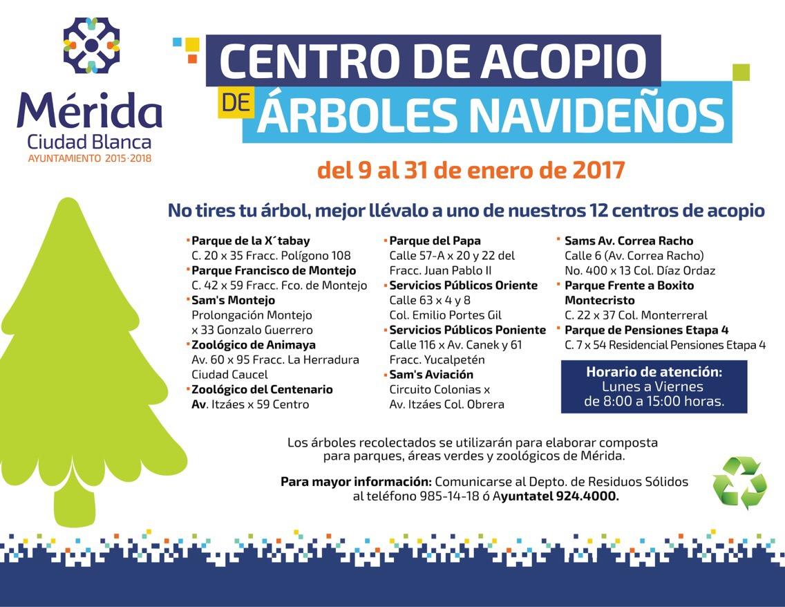 Abren 12 centros de acopio para árboles navideños