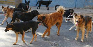 perros_callejeros
