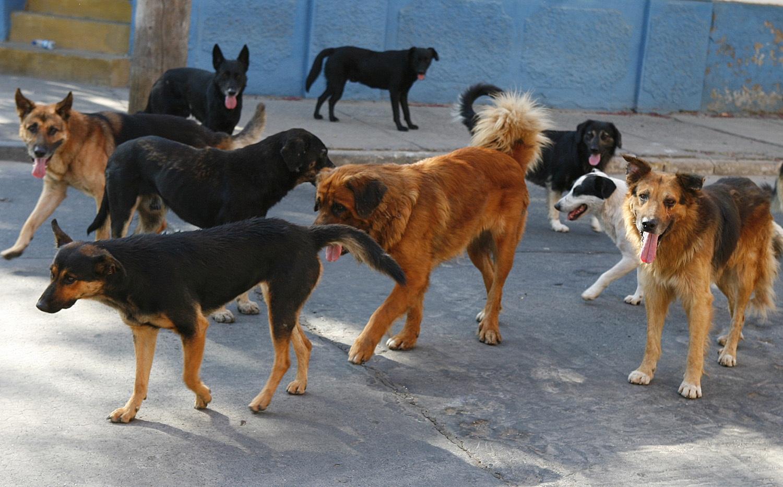 Cada 3 horas, un perro muerde a una persona en Yucatán (video)