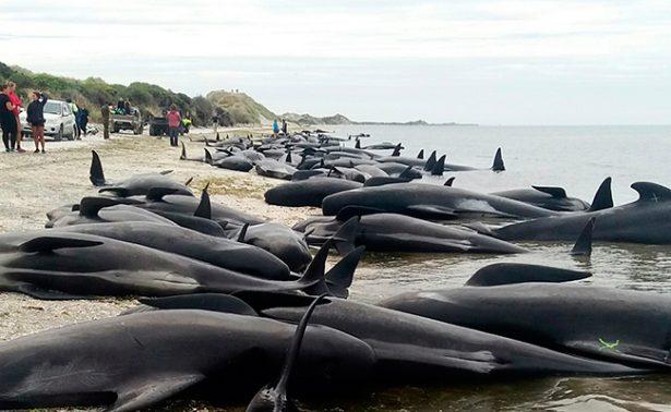 Quedan varadas más de 400 ballenas en Nueva Zelanda
