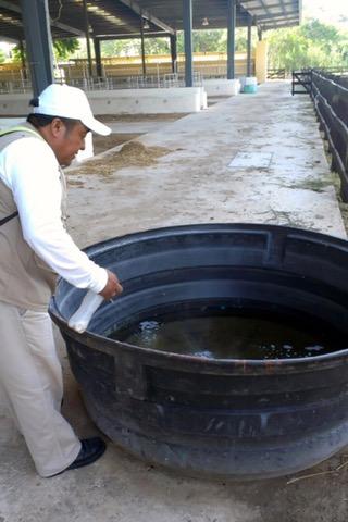 Eliminan criaderos y moscos en Plaza Carnaval