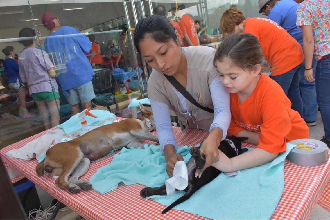 Octava campaña de esterilización para perros y gatos en Mérida
