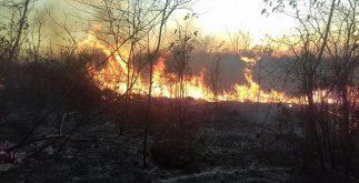 incendio_municipios