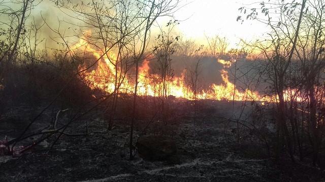 Mayor afectación por incendios forestales