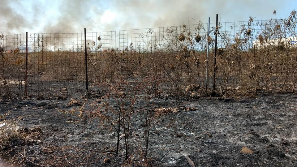 Se acerca en Yucatán temporada de incendios forestales