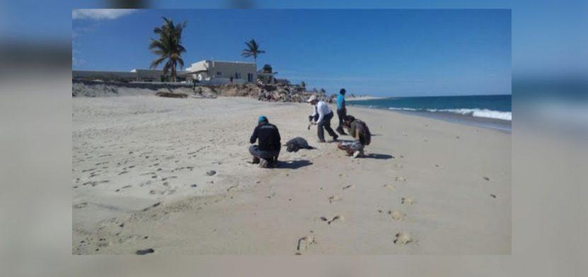 tortuga-marea-roja-1