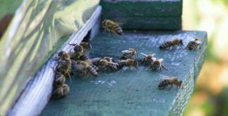 bees-88242_1920