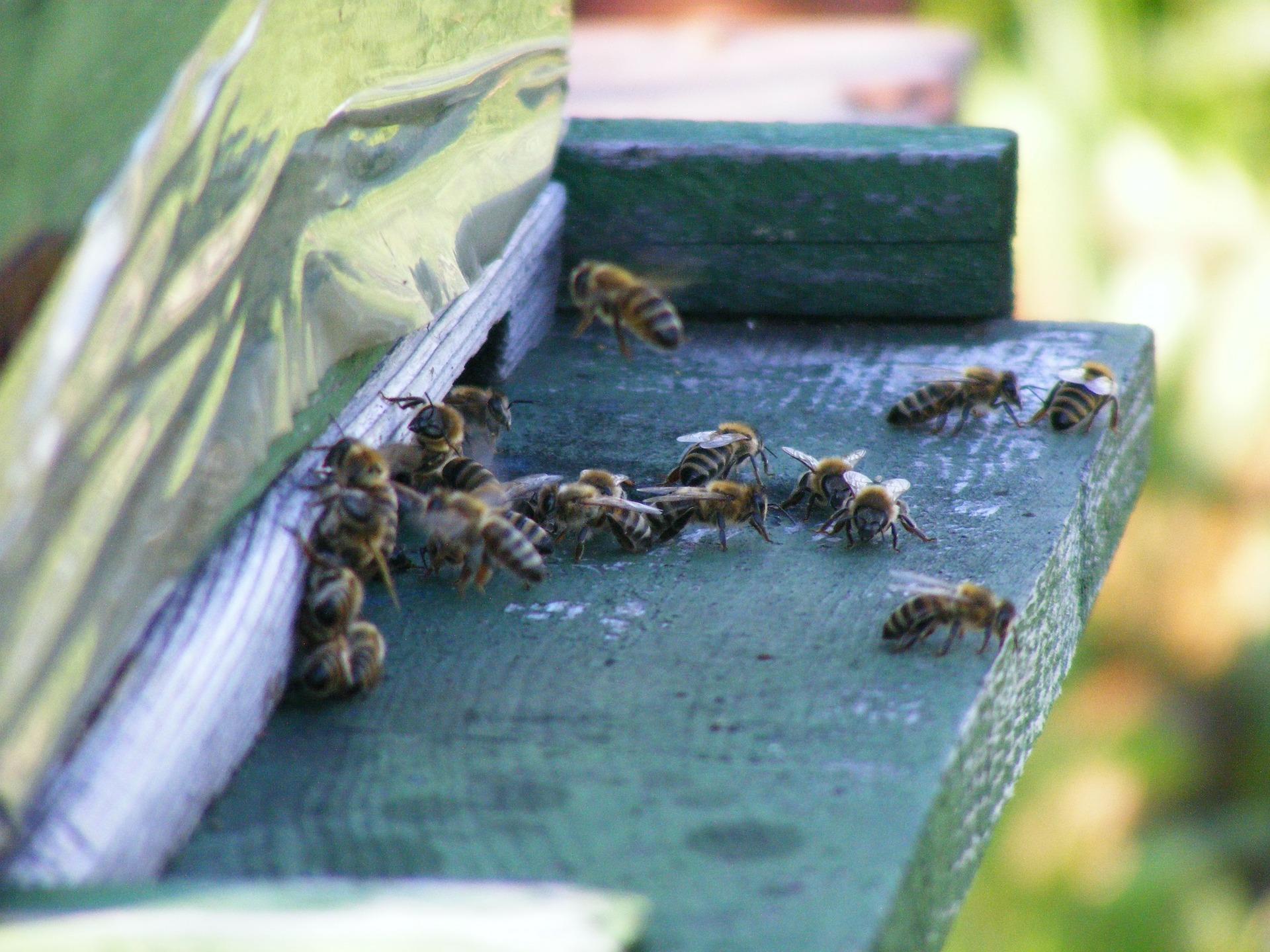 Regresan a Suprema Corte líderes de apicultores mayas