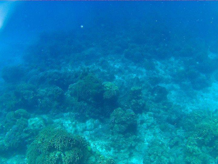 El dramático futuro para los corales en el mundo
