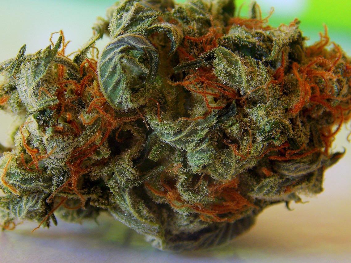 Exploran expertos uso médico de cannabinoides