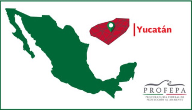 Profepa pide a Yucatán frene 'Duelo de Lazos ' o 'Duelo de Ganaderías'