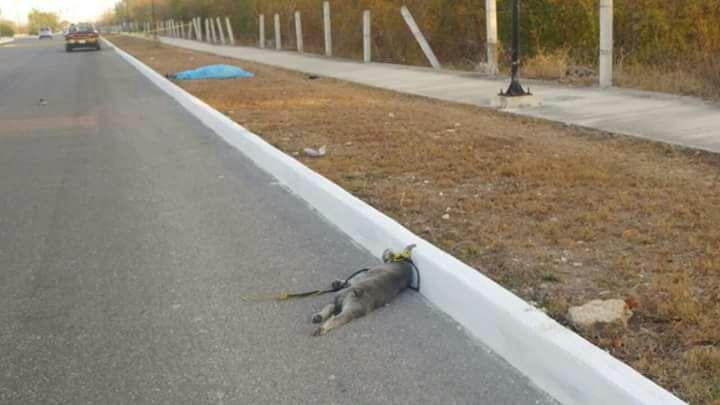 Mueren juntos: Atropellan a corredor y su perro