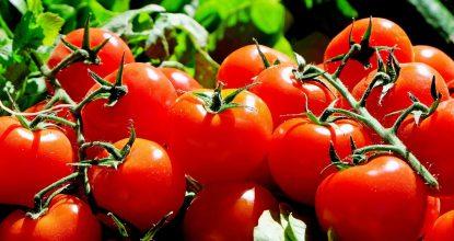 tomatoes-1280859_1280