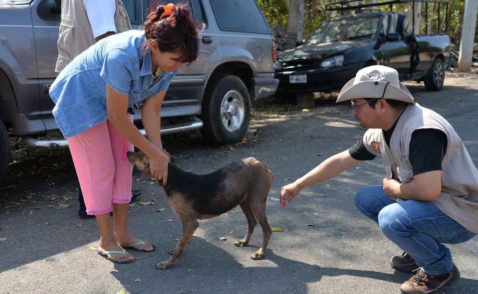Otro caso de rabia en Yucatán, ahora en municipio deProgreso