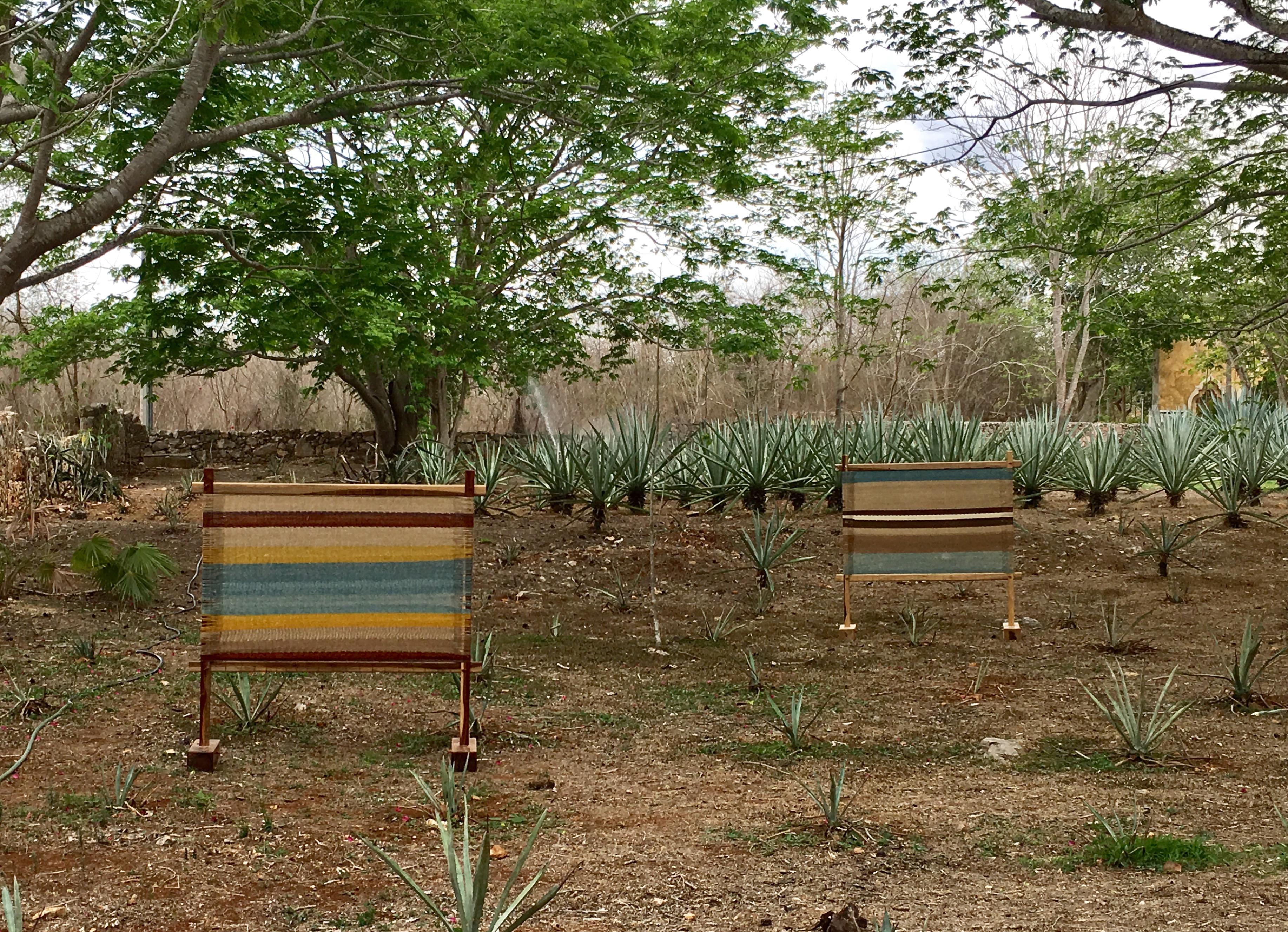 Abre Hacienda Ochil 'jardín cultural y artístico'