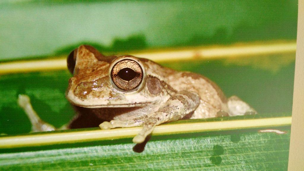 Fauna extraordinaria en peligro de extinción | LectorMx