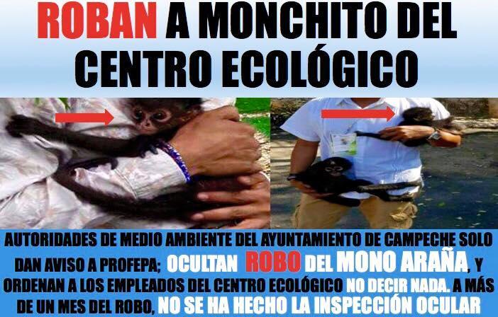 Indigna en Campeche 'robo' de mono araña