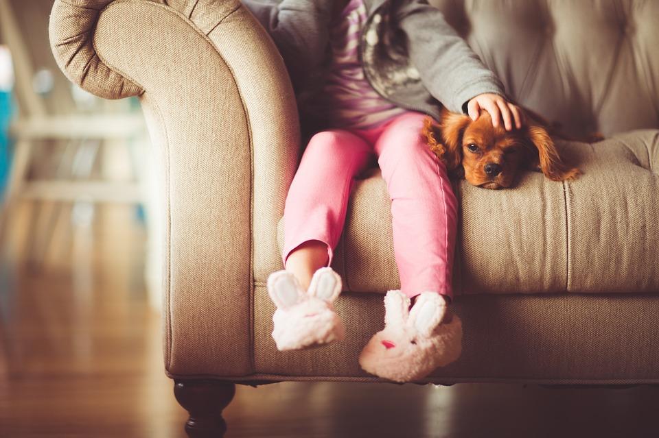 Cinco enfermedades que mascotas comparten con humanos