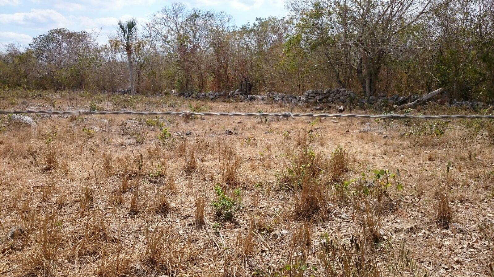 Tendremos calor esta semana en Península de Yucatán