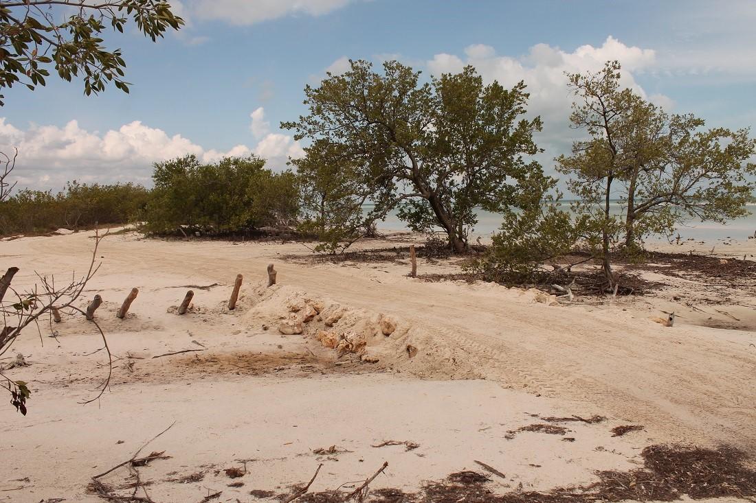 Alertan por contaminación del agua en ANP de Caribe Mexicano