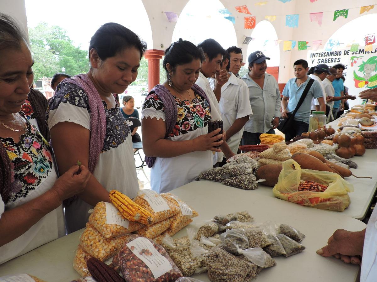 Difundirán importancia de Milpa Maya en CDMX