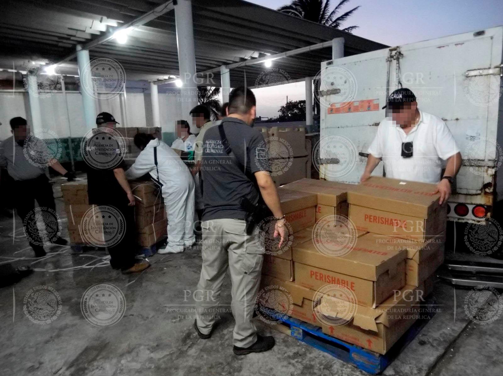 Intercepta PGR 5.5 toneladas de pepino de mar en Yucatán