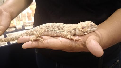 reptiles2