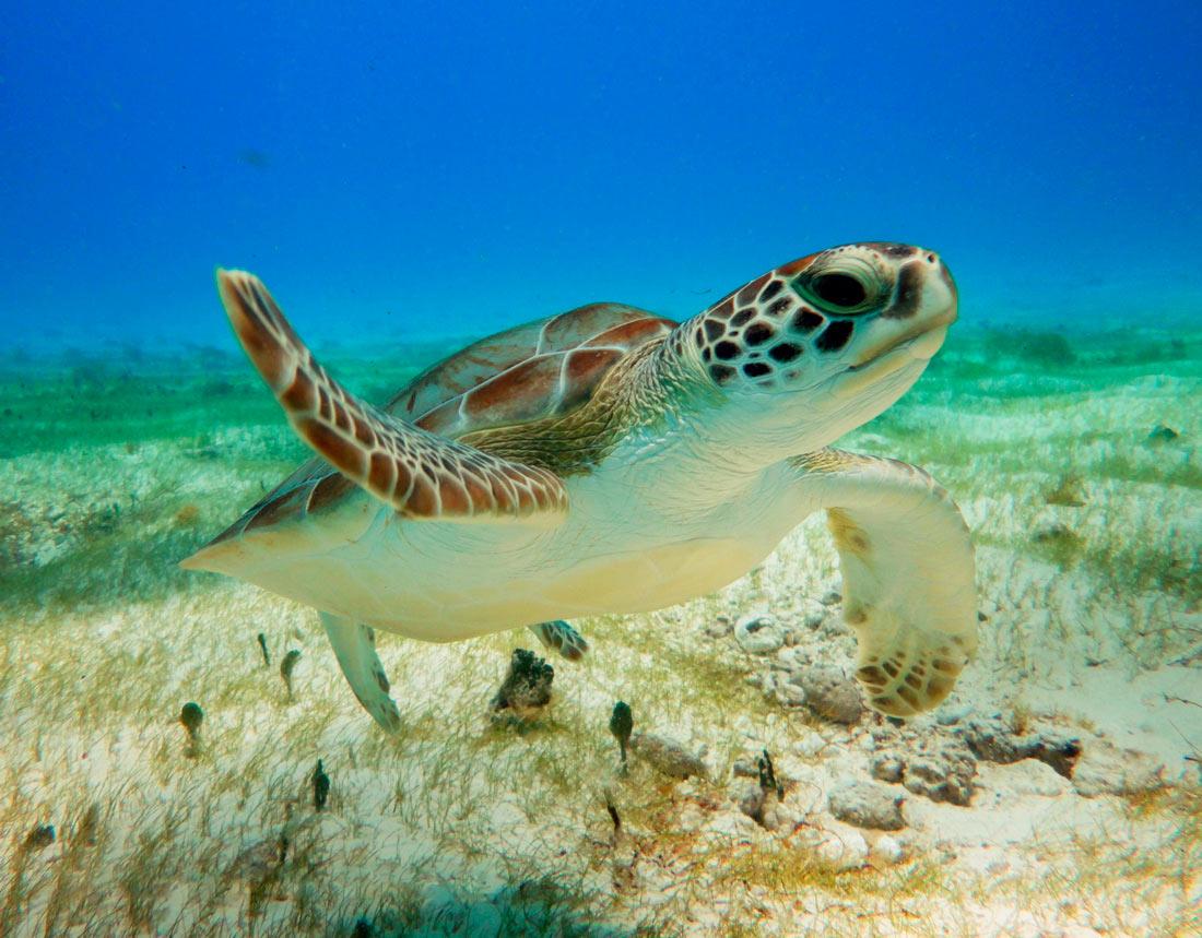 """A propósito del """"Día Mundial de las Tortugas"""""""