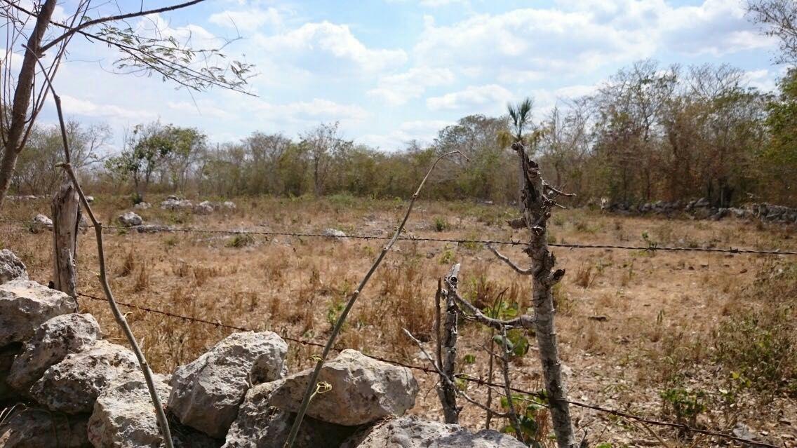Documentan en Yucatán alteraciones climáticas