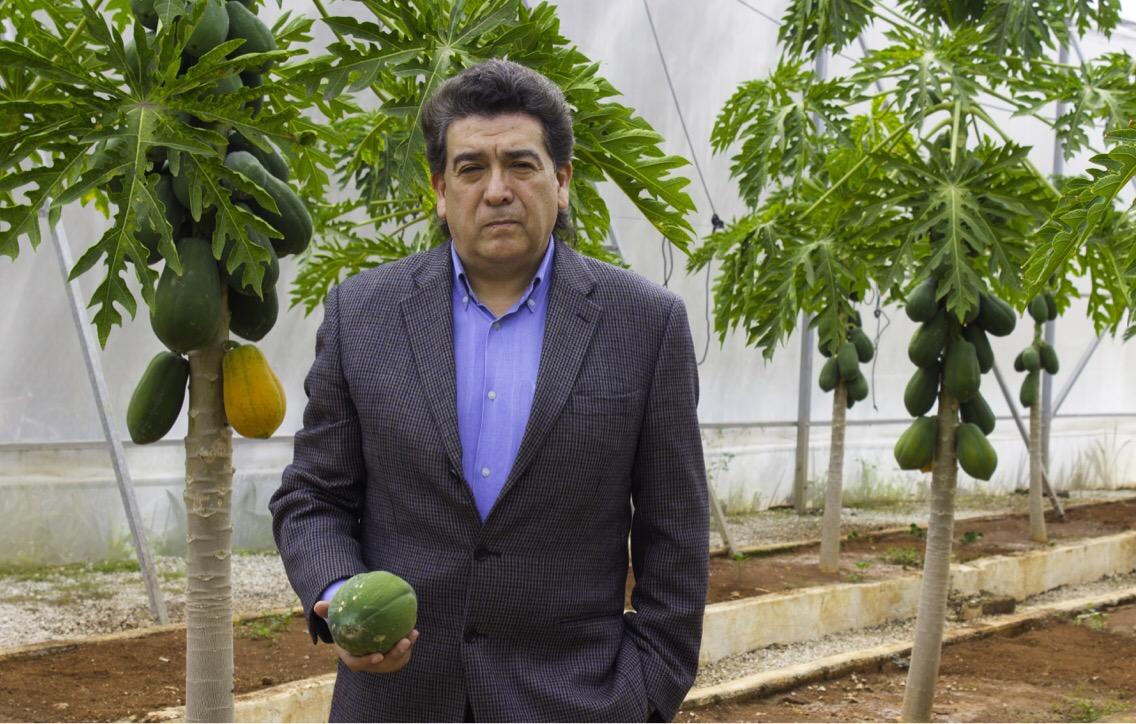 Tendrá Mérida cumbre de papayeros