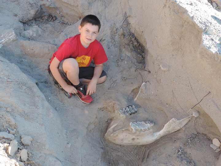 Niño encuentra por accidente fósil de 1.2 millones de años