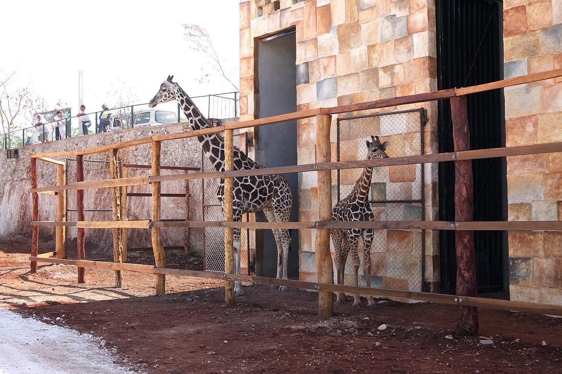 En zoológicos, inquilinos vulnerables a visitantes
