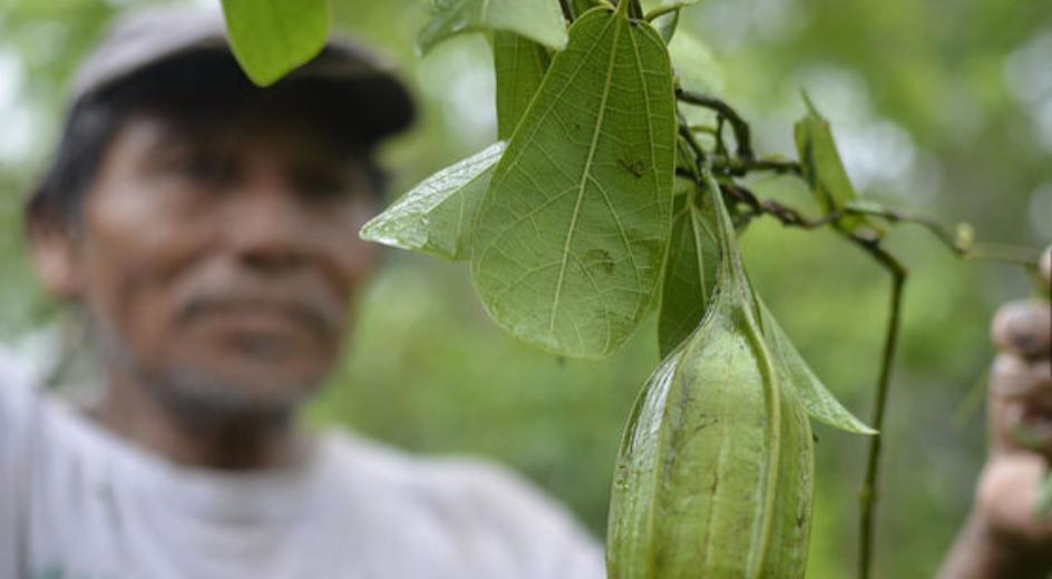 Lucha a contracorriente por preservar agricultura ecológica