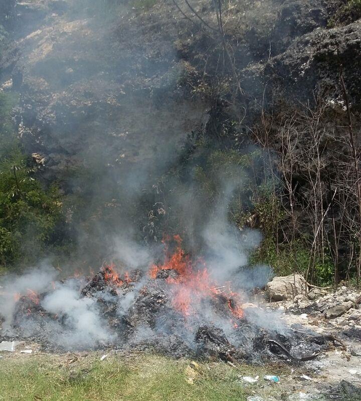 Incinera PGR en Yucatán droga y pepino de mar