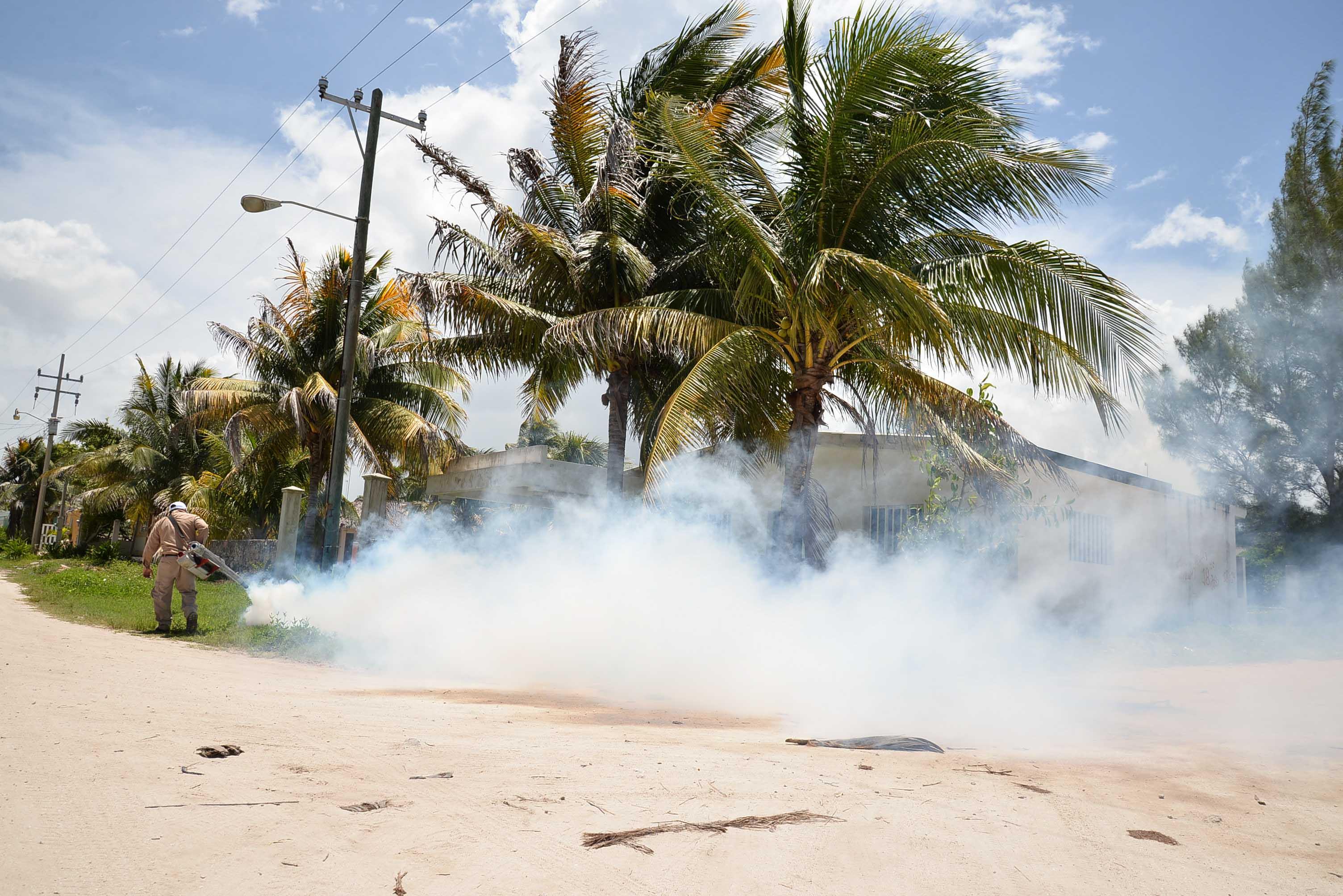 Vigilan vector de paludismo en costas de Yucatán