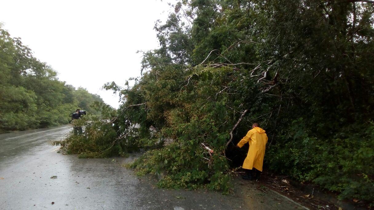 Saldo blanco en sur de Yucatán; levantan árboles en carreteras