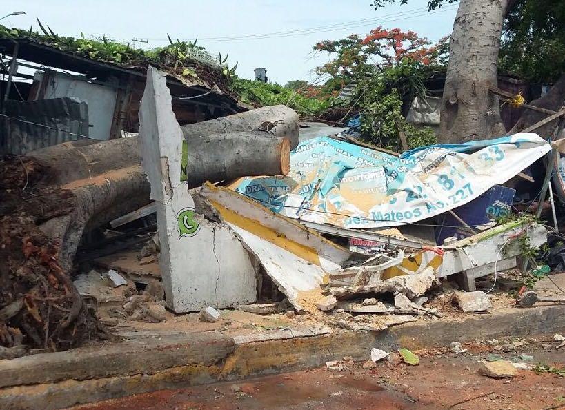 El árbol cayó en la calle Tabasco afecto tres puestos del Mercado Pedro Sainz de Baranda de los cuales uno se destruyó por completo, personal del Ayuntamiento trabaja para retirar las ramas