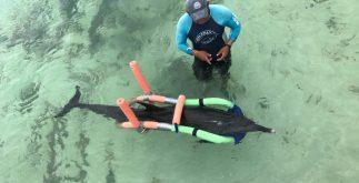 delfin_rescate1