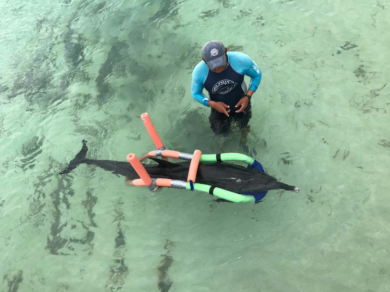 Muere delfín rescatado en playa yucateca
